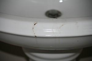 chocolate, not poop