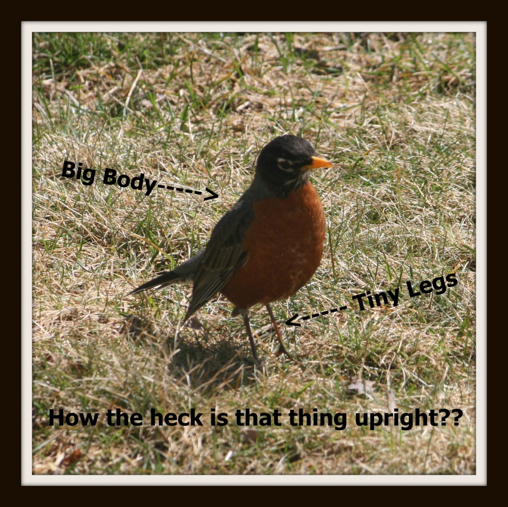 random thought thursday bird legs