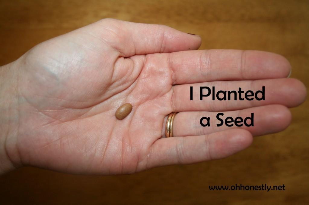 One Small Seed