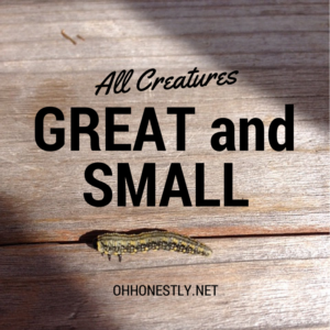 Week 34: All Creatures Great and Small