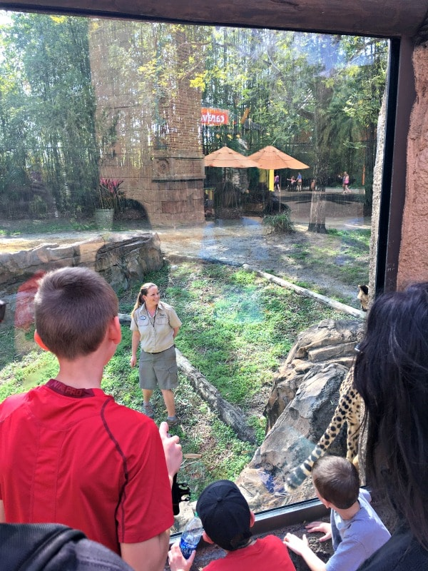 We asked kids from 4-44 what their favorite Busch Gardens attractions are. Here' what they said.