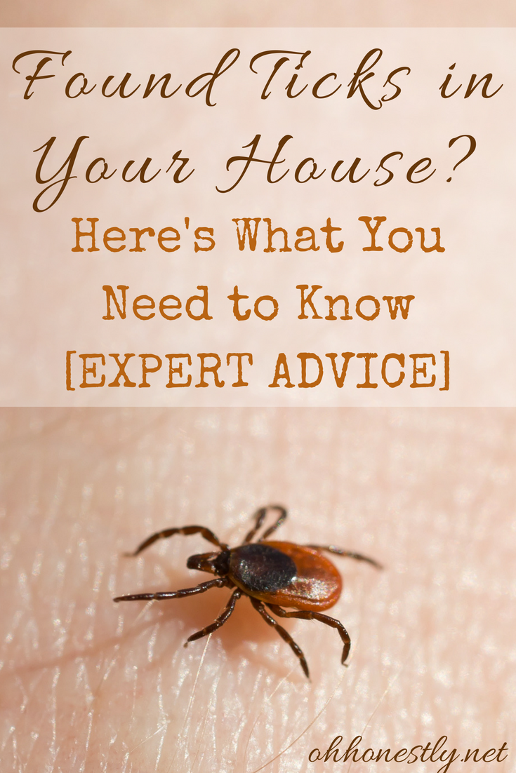 If you found ticks in your house, you probably have a thousand scary questions running through your head. Get answers from an expert here.